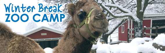 Winter_Break_Zoo_Camp_FP