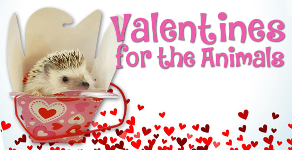 Valentines_For_the_Animals_IB_2019